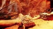 Turtle in hot climate Stock Footage