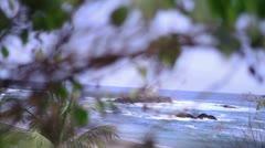 Sea plant Stock Footage