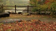 Stock Video Footage of Autumn falling leaves.