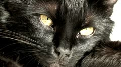 Flea does not sleep a cat. Stock Footage