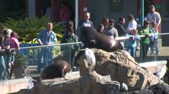 WorldClips-SeaWorld Sea Lion Stock Footage