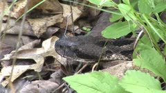 Rattlesnake head Stock Footage
