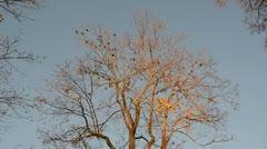 0165 birds in the autumn tree Stock Footage