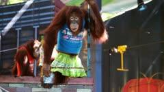 Monkey dance Stock Footage