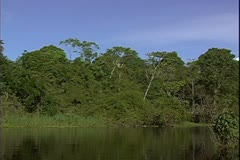 WorldClips-Jungle River Bend-POV Arkistovideo
