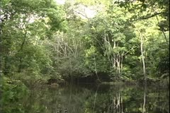 WorldClips-Jungle Stream Bend-POV Arkistovideo