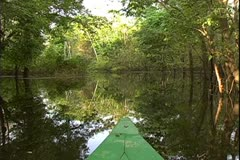 WorldClips-Jungle Stream Boat Bow Stock Footage