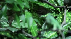 Kameleon - focusshift - stock footage