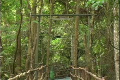 WorldClips-Jungle Walkway-zoom Stock Footage