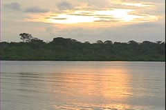 WorldClips-River Sunset & Dolphin-ws - stock footage