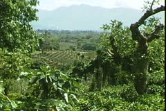 WorldClips-Coffee Plantation Stock Footage