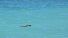 Pelican flying above the blue water Stock Footage