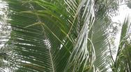 Palm Tree Branches say in the breeze Stock Footage