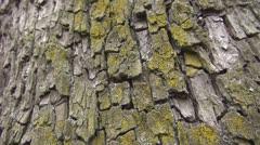Beautiful ants on tree bark - stock footage