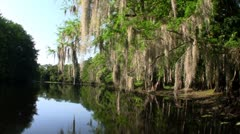 POV from a boat through the Florida Everglades. Stock Footage