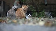 Stock Video Footage of Four Urban Cats.