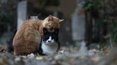 Four Urban Sleepy Cats - stock footage