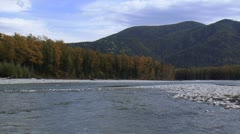 Siberian mountain river in fall colors. Stock Footage