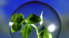 Plant in light bulb, closeup Stock Footage