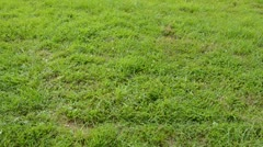 0181 two old wheels on the grass in motion Stock Footage