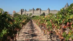 Vineyard in Carcassonne, France Stock Footage