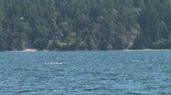 WorldClips-Orcas Fishing Stock Footage