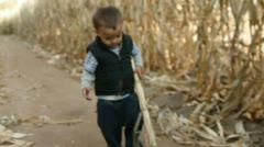 Corn maze 1 Stock Footage
