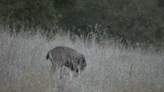 Deer family feeding Stock Footage