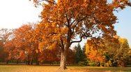 Beautiful Autumn Scene 01 falling leaves Stock Footage