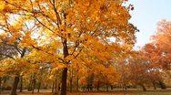 Beautiful Autumn Scene 03 falling leaves Stock Footage