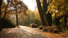 Beautiful Autumn Scene 06 falling leaves Stock Footage