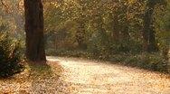 Beautiful Autumn Scene 08 falling leaves Stock Footage