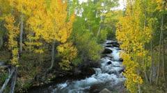 Autumn River Stock Footage