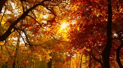 Beautiful Autumn Scene 15 falling leaves stylized - stock footage