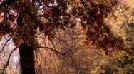 Beautiful Autumn Scene 21 falling leaves stylized Stock Footage