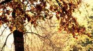 Beautiful Autumn Scene 22 falling leaves stylized Stock Footage