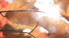 Autumn Leaves 6 Sunlight Stock Footage