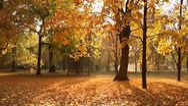Beautiful Autumn Scene Elm 05 falling leaves Stock Footage