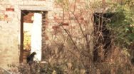 Cat in the Window of an Abandoned House stylized Stock Footage