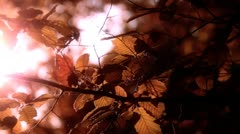 Elm Autumn Leaves 03 close up stylized Stock Footage