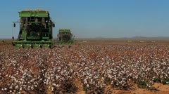 Cotton Drive Stock Footage