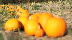 Pumpkin Row - Rack - Depth of Field Stock Footage