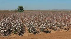 Cotton Farming Time Lapse Stock Footage