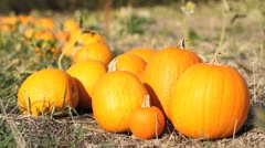 Pumpkin Pile - Row - Depth of Field Stock Footage