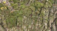 Beautiful ants on tree bark Stock Footage