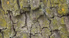 Beautiful ants on tree bark Stock Footage