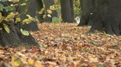 Autumnal Trees and Leaves Stock Footage
