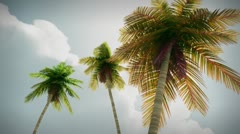 (1274) Romantic tropical palm trees travel fantasy animation - stock footage