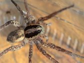 Wolf spider Stock Footage