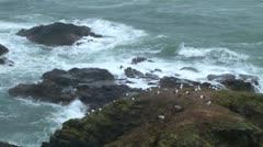 Lizard Point Stock Footage